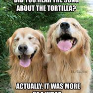Funny Golden Retriever Tortilla Joke Meme Postcard