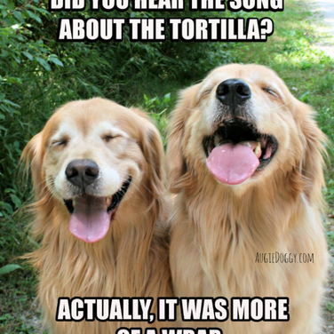 Funny Golden Retriever Tortilla Joke Meme Postcard