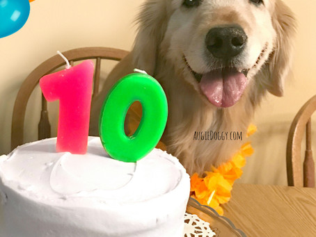Ti's 10th Birthday! And Giveaway!