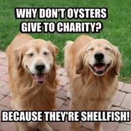 Laughing Golden Retriever Funny Shellfish Joke Postcard