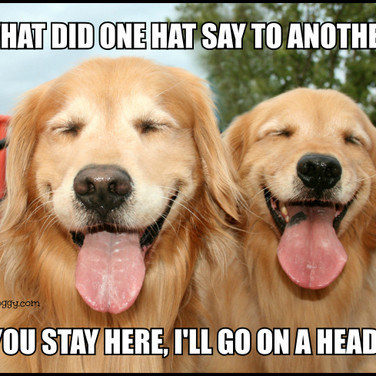 Funny Golden Retriever Hat Joke Meme Postcard