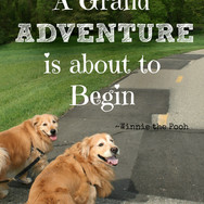 A Grand Adventure Is About To Begin
