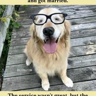 Funny Golden Retriever Wedding Reception Joke Meme Postcard