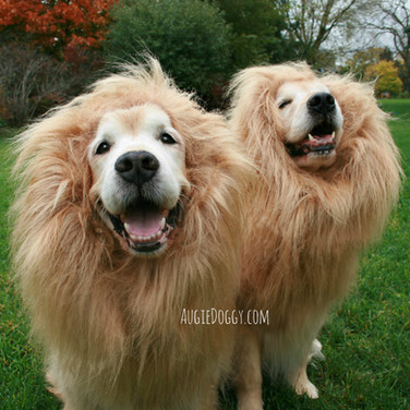 Lion Dogs!