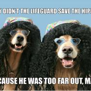 Funny Golden Retriever Lifeguard Hippie Joke Postcard