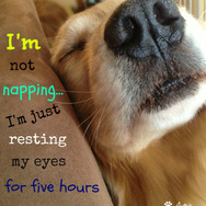 I'm Not Napping