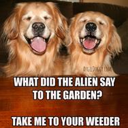 Funny Golden Retriever Alien Joke Meme Postcard