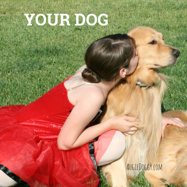 Kiss Your Dog!