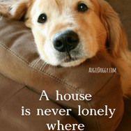 A House Is Never Lonely