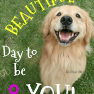 It's a Beautiful Day to be You
