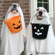 Halloween Ghosts!