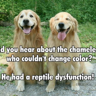 Funny Golden Retriever Reptile Dysfunction Joke Postcard