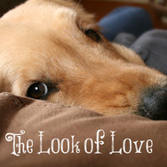 The Look of Love