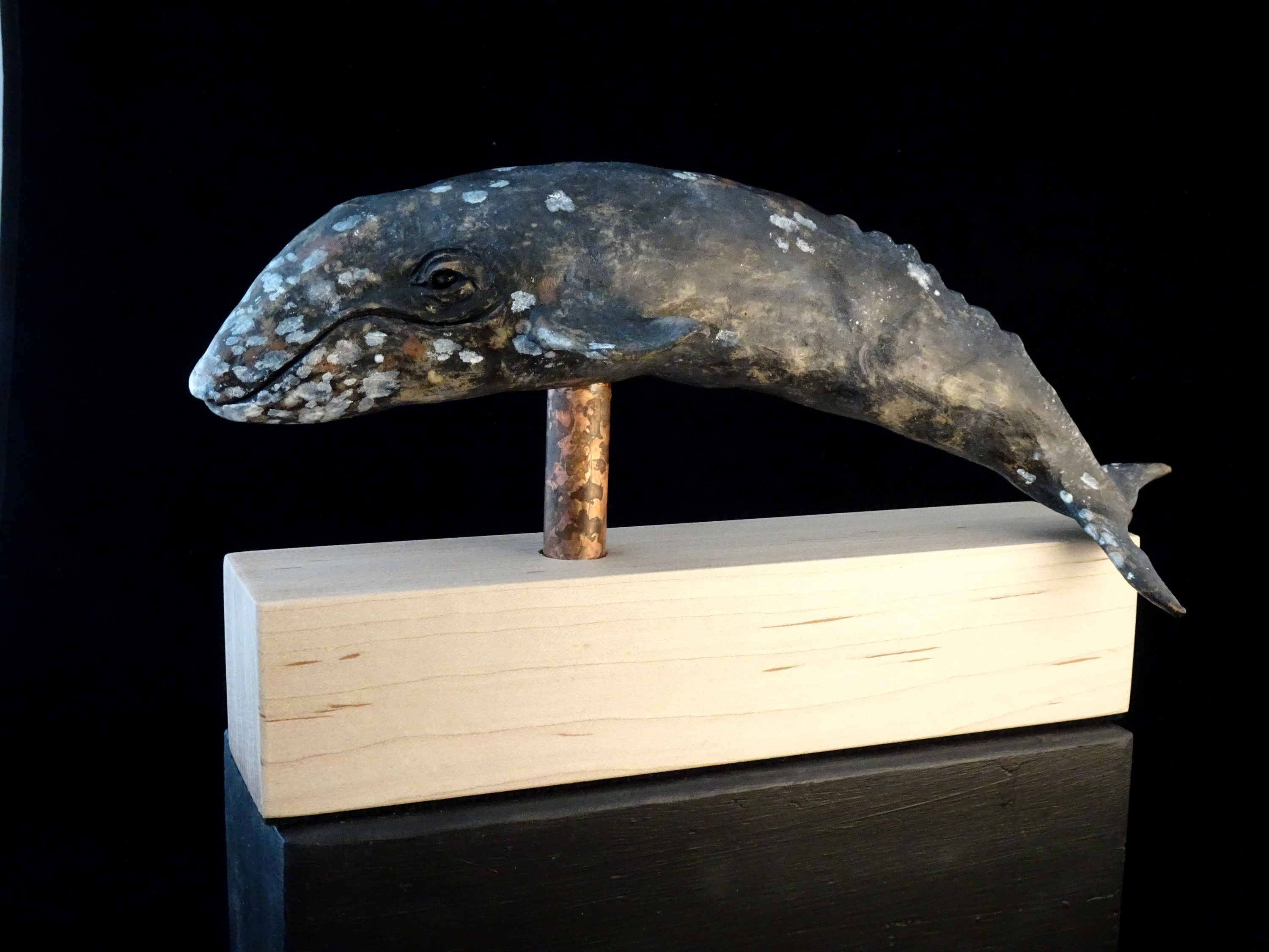 Mounted Gray Whale