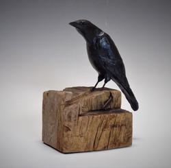 Mounted Crow