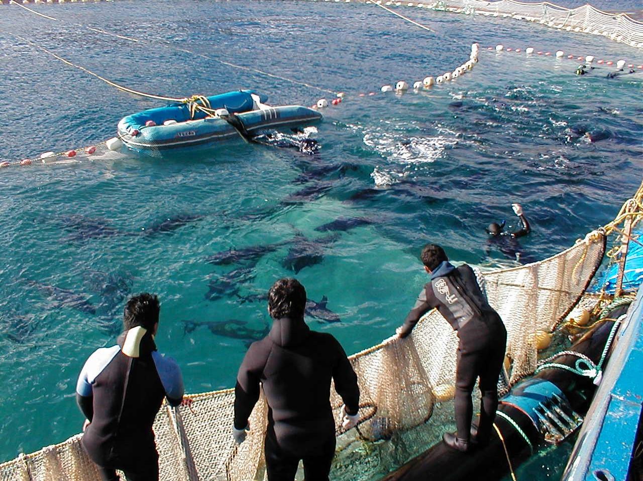 Omega Azul Seafood Dive Team