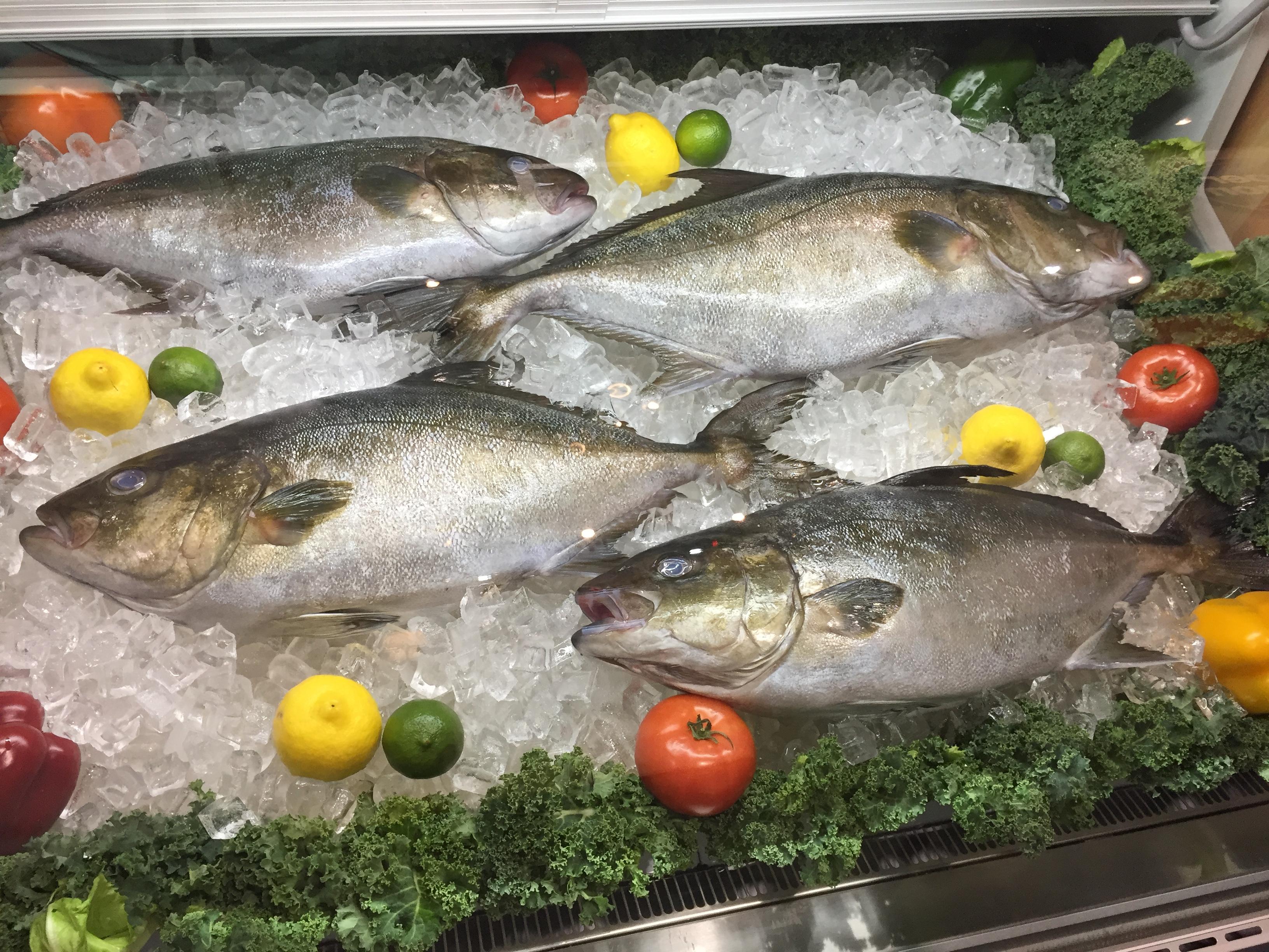 Omega Azul Baja Kanpachi Fish SENA