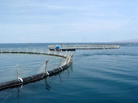 Omega Azul Seafood's ASC Certified Baja Kanpachi (also known as Kampachi, Amberjack, or Longfin Yellowtail) farm site in the Sea of Cortez in Baja California Sur, Mexico