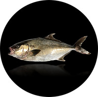 whole fish with reflection against black