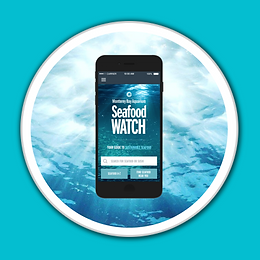 Seafood Watch App White Porthole Blue Ba