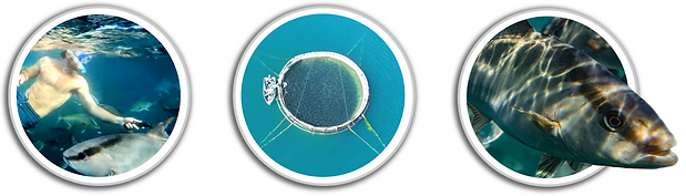 porthole images for farm section of webs