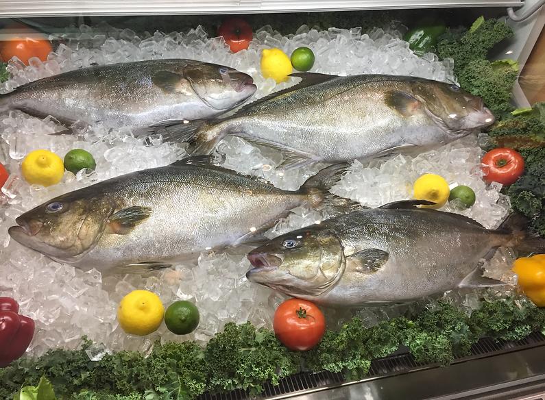Omega Azul Seafood's Baja Kanpachi (also known as Kampachi, Amberjack, or Longfin Yellowtail) in Display Case