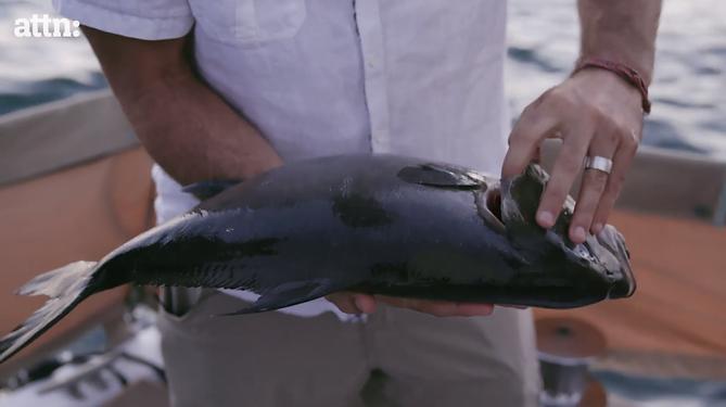 "James Arthur Smith holding a fresh Baja Kanpachi (also known as Kampachi, Amberjack, or Longfin Yellowtail) on Zooey Deschanel's show ""Your Food's Roots"" Season 1, Episode 1"