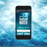 MBA Seafood Watch Mobile App Photo with