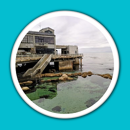 Monterey Bay Aquarium White Porthole Blu