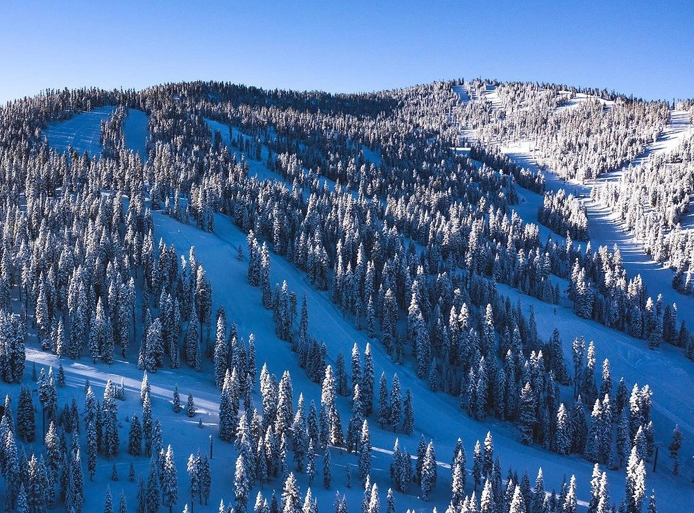 trees on a snowy mountain