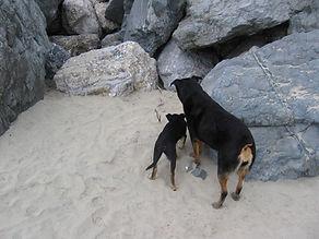 Sierra 2.jpg
