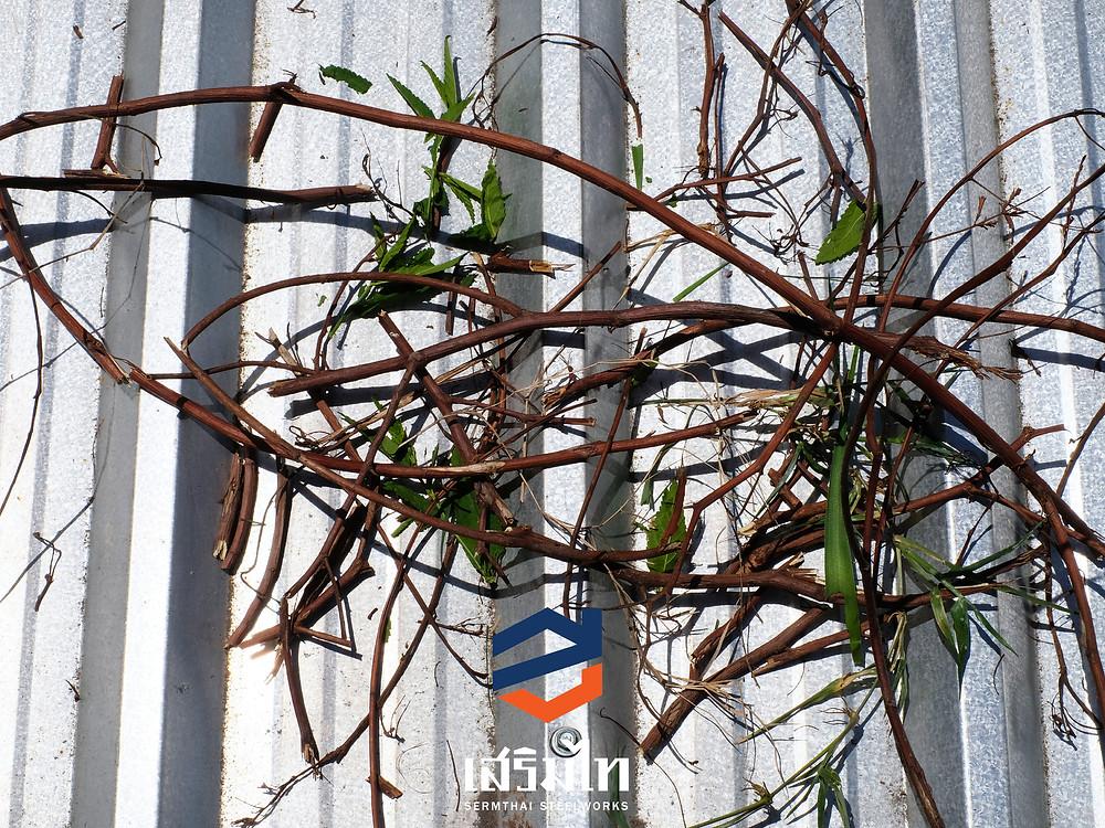 การจัดการกับความชื้นจากใบไม้ กิ่งไม้ หรือโครงไม้