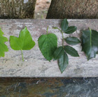Colorama végétal Sonia Meunier Histoire de.jpg