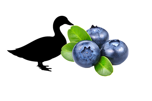 Free Range Duck and Blueberry