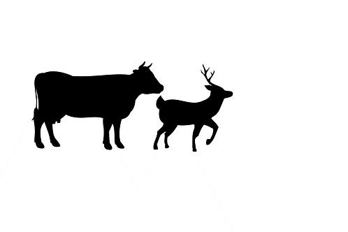 Pastured Beef and Venison
