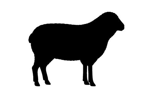Local Pastured Mutton