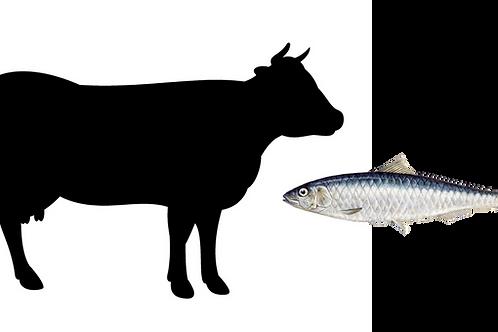 Beef & Sardine