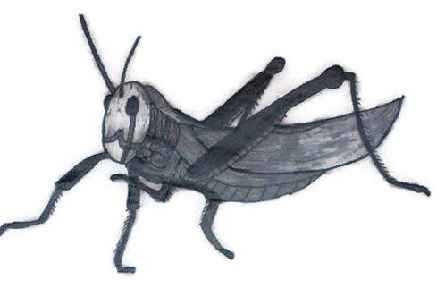 Grasshopper Wildlife Cards set of 6