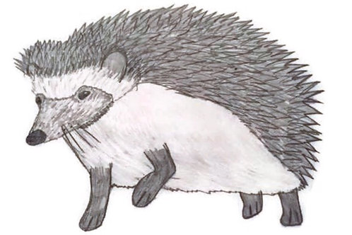 Wildlife Hedgehog Cards set of 6