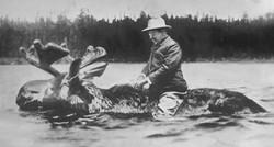 Roosevelt on Moose.jpg