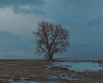 Nebraska_1.jpg