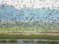 Duck Fields