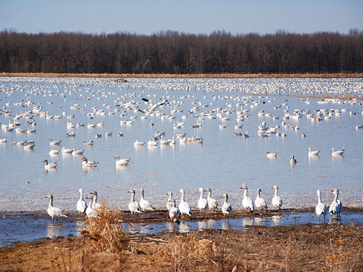 Duck Diva's Field Report: 2/12/21