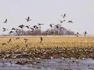 field-w-ducks.jpg
