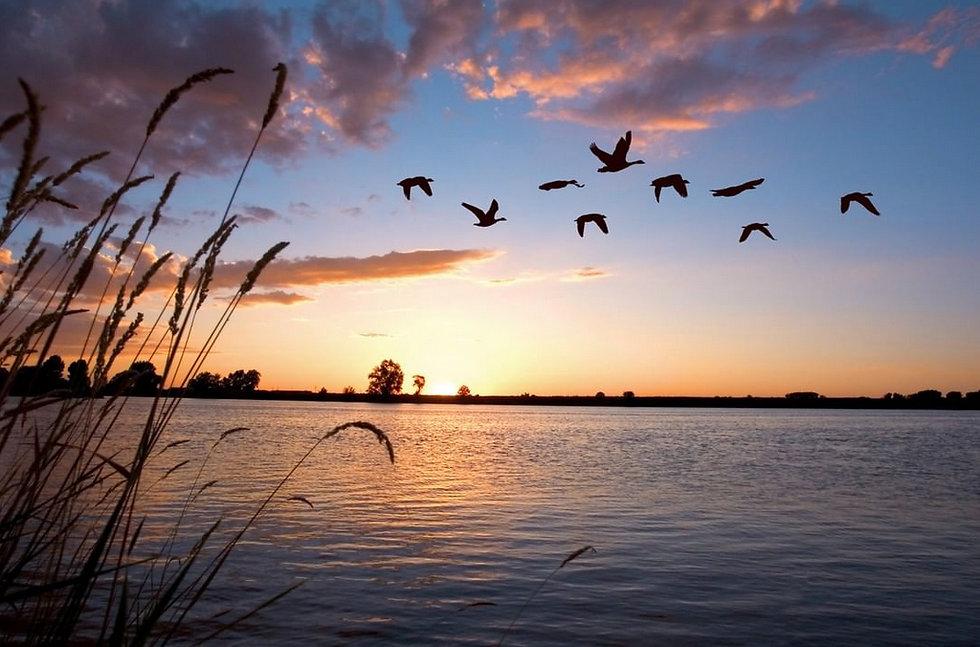 beautiful sunset w ducks.jpg