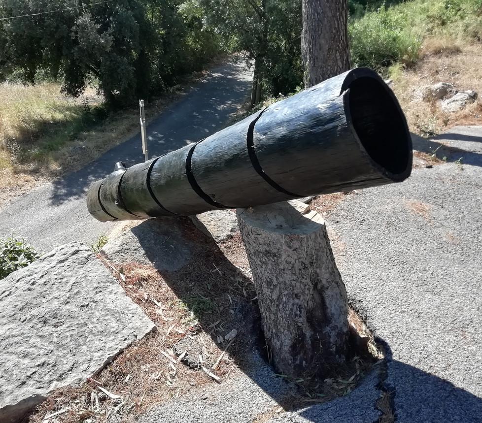 Le pin d'Alep la délaissée que le noir soulage