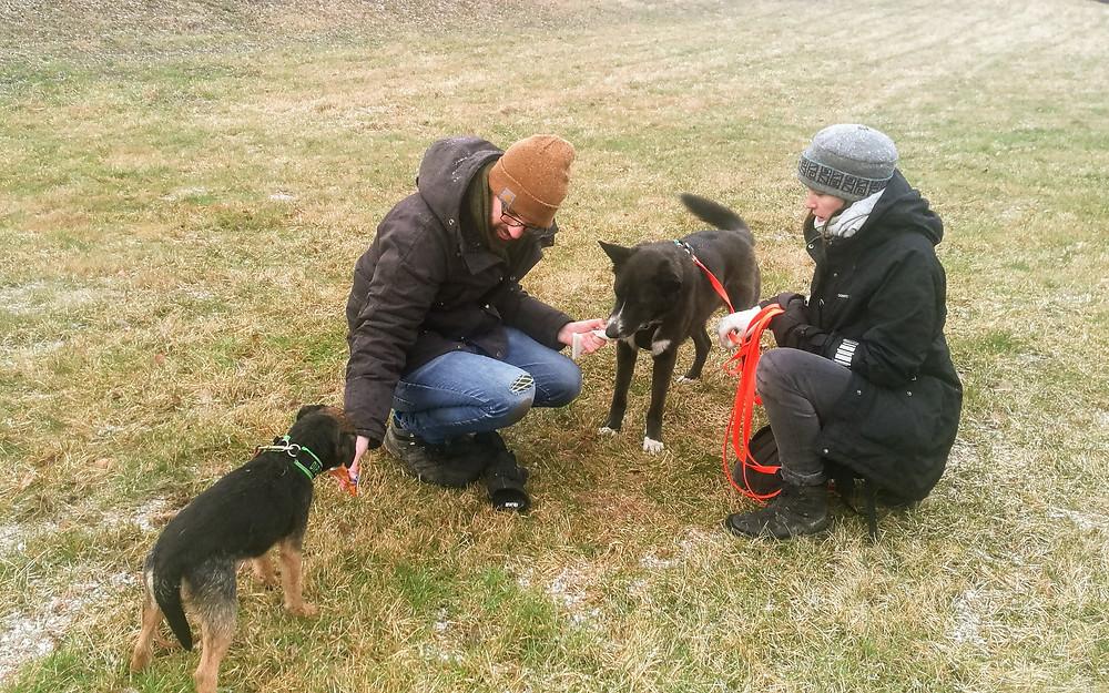 Diplomathunden Aslan i ett hundmöte