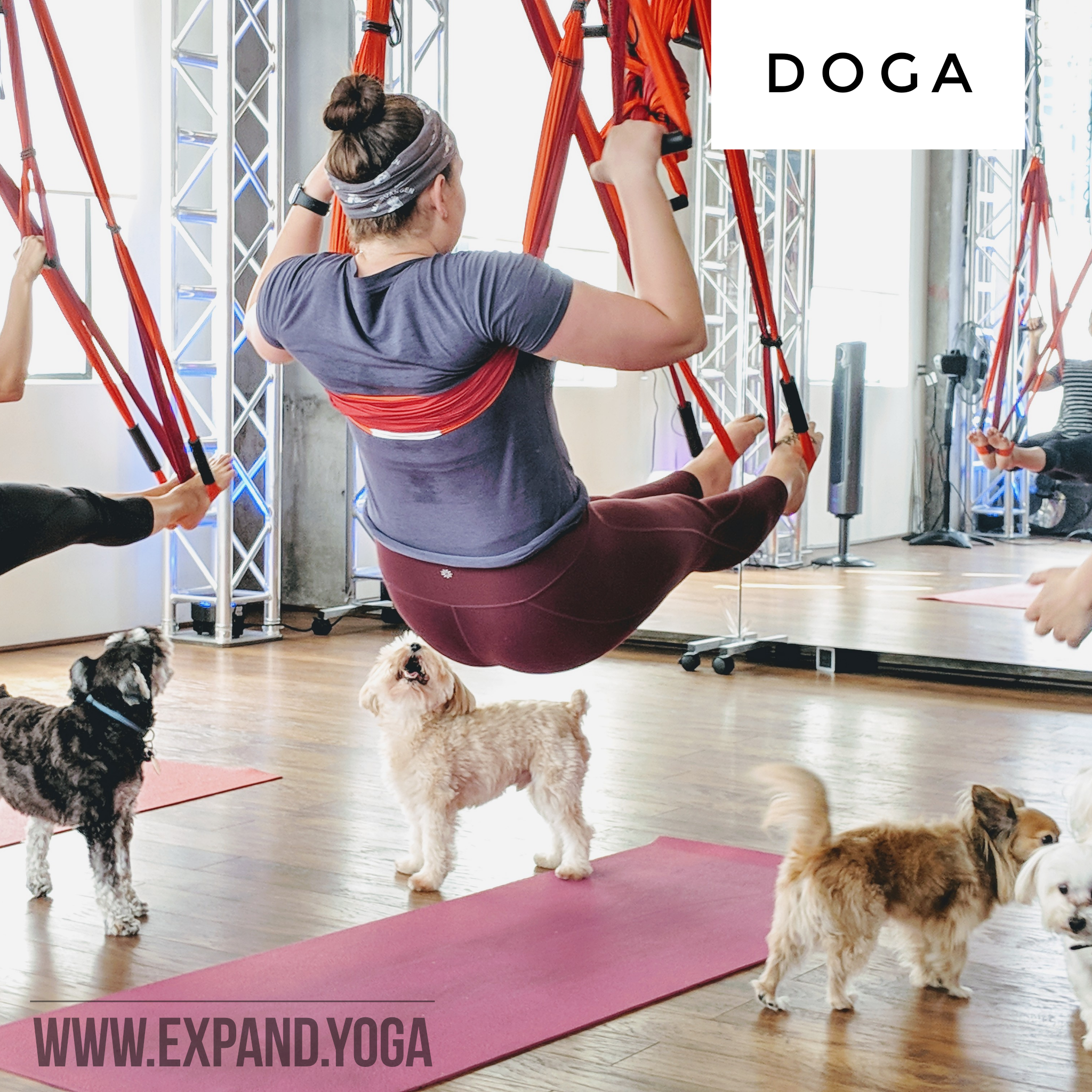 Expand DOGA Apr 15 (16)