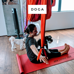 Expand DOGA Apr 15 (10)
