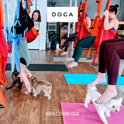 Expand DOGA Apr 15 (12)